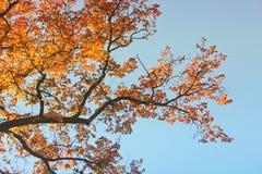 Верхние части деревьев Осень стоковое изображение rf