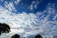 Верхние части деревьев против облачного неба в весеннем времени Стоковая Фотография