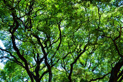 Верхние части дерева в Буэносе-Айрес стоковые изображения rf