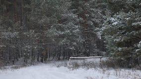 Верхние части дерева зимы в природе леса зимы снега благоустраивают предпосылку рождественской елки красивую Стоковое Изображение