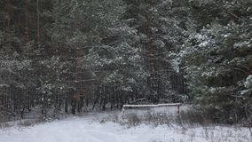 Верхние части дерева зимы в природе леса зимы снега благоустраивают предпосылку рождественской елки красивую Стоковые Фотографии RF