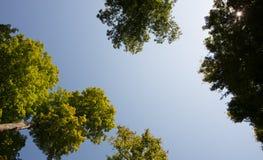 Верхние части дерева и взрыв Солнця Стоковые Изображения