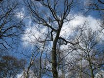 Верхние части дерева на солнечный день зимы Стоковое Изображение RF