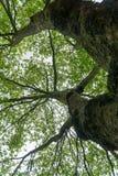 Верхние части дерева против неба Стоковое Изображение RF