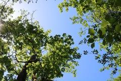 Верхние части дерева снизу стоковое изображение