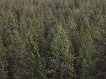 Верхние части дерева Стоковое фото RF