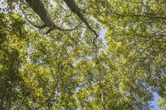 Верхние части 3 дерева Стоковая Фотография RF