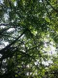 Верхние части дерева Стоковые Фото