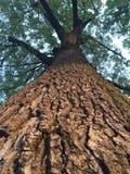 Верхние части дерева Стоковая Фотография RF