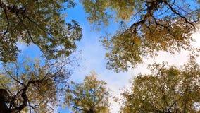 верхние части деревьев сток-видео
