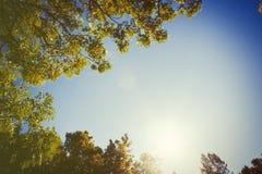 Верхние части деревьев Стоковые Изображения