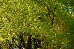 Верхние части кипариса болота Стоковые Фото