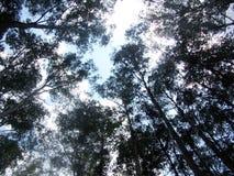 верхние части неба Стоковые Изображения