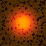 Верхние части Солнця и дерева Стоковое Фото