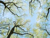 Верхний взгляд ветвей дерева весной стоковые изображения