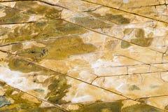 Верхний вид с воздуха песчаника трясет картину на австралийской береговой линии Стоковое Изображение