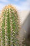 Верхний кактус Стоковое фото RF