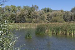 Верхний конец озера Roberts, Неш-Мексико Стоковое фото RF