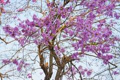 Верхний пинк леса дерева цветет предпосылка Стоковое Фото