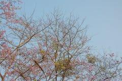 Верхний пинк леса дерева цветет предпосылка Стоковое фото RF