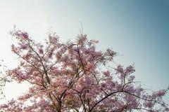 Верхний пинк леса дерева цветет предпосылка Стоковая Фотография RF