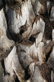 Верхняя деталь хобота текстуры предпосылки пальмы Стоковое Изображение