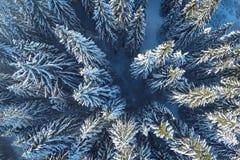 Верхняя елевая съемка взгляда сверху воздушная Стоковое Изображение