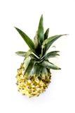 Верхняя часть ананаса Стоковые Фото