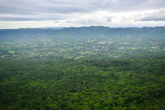 Верхняя часть взгляда леса Стоковое фото RF