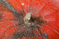 Верхняя часть взгляда макроса тыквы Стоковая Фотография