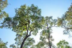 Верхняя часть дерева на лесе с светом солнца Стоковые Фото
