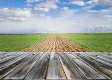 Верхняя часть деревянного стола с свежим зеленым аграрным полем и голубое небо в лете Космос для настоящего момента продукт стоковое фото rf