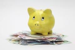 верхняя часть евро кредиток банка piggy стоящая Стоковые Изображения