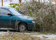 Верхняя часть дерева которая упала к автомобилю в зиме стоковые изображения rf
