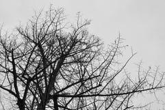Верхняя часть дерева против неба Стоковое фото RF