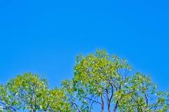 Верхняя часть дерева Стоковое Изображение