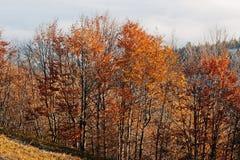 Верхняя часть деревьев на солнце освещает на тумане предпосылки гор осени Стоковая Фотография