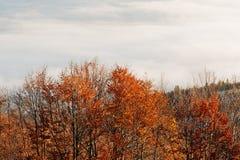 Верхняя часть деревьев на солнце освещает на тумане предпосылки гор осени Стоковая Фотография RF