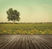 Верхняя часть деревянного стола в открытых полях одуванчиков Стоковое Фото