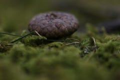 Верхняя часть жолудя в лесе Irun Испании стоковое изображение