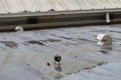 Верхняя часть крыши Стоковая Фотография