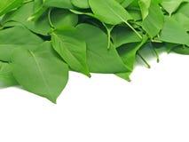 верхняя часть листьев Стоковые Изображения