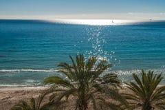 Верхняя часть пальмы на тропическом пляже на солнечный день Стоковая Фотография