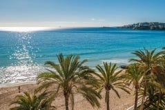 Верхняя часть пальмы на тропическом пляже на солнечный день Стоковое фото RF