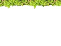 верхняя часть рамки зеленая Стоковое Изображение