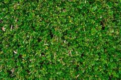 Верхняя часть соперничает плоско положение зеленой текстурированной изгороди коробки стоковые изображения rf