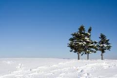 верхняя часть холма елей Стоковые Фото