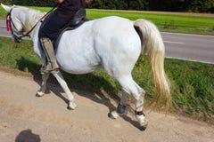 верховая лошадь 2 дам на солнечный день в сентябре стоковое изображение