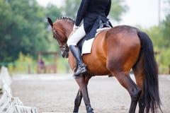 Верховая лошадь спортсменки на конкуренции dressage Стоковое фото RF
