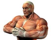 верхушка тела спортсменов Стоковое Изображение RF